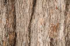 Texture d'écorce d'arbre Fond en bois de nature Image stock