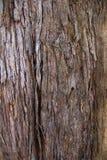 Texture d'écorce d'un arbre tropical Images stock