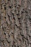 Texture d'écorce de brun foncé Images stock