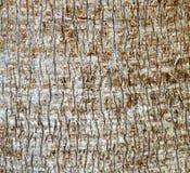 Texture d'écorce de palmier Photos stock