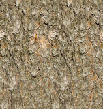 Texture d'écorce de pin Images stock