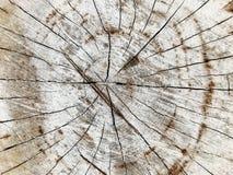 Texture d'?corce de pin et fond, fin vers le haut de vue de mod?le naturel et organique d'?corce de pin image stock