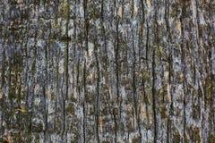 Texture d'écorce de pin vieille, fond photo libre de droits
