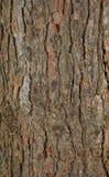 Texture d'écorce de Pinetree Photo libre de droits