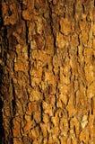 Texture d'écorce de pommier Photographie stock libre de droits