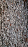 Texture d'écorce de sapin Image libre de droits
