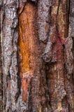 Texture d'écorce des arbres dans forrest images stock
