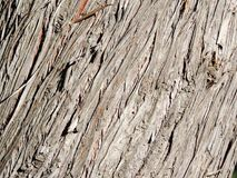 Texture d'écorce en bois d'arbre de cyprès image stock