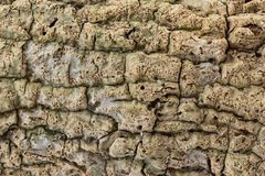 Texture d'écorce d'usine en plan rapproché Image stock