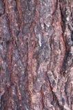 Texture d'écorces d'arbre Photo libre de droits