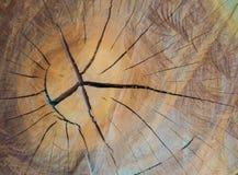 Texture d'anneaux d'arbre de l'eucalyptus pour connaître l'âge image stock