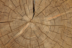 Texture d'arbre Photo libre de droits