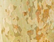 Texture d'arbre Photo stock