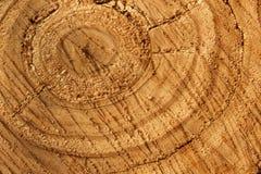 Texture d'arbre de chêne Photos libres de droits