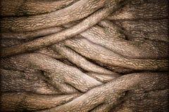 Texture d'arbre et d'écorce Photographie stock libre de droits
