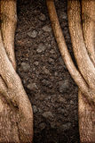 Texture d'arbre et de sol Photo libre de droits