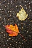 Texture d'asphalte Photos stock