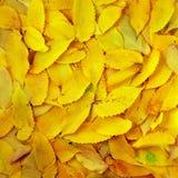 Texture d'automne Image stock