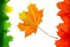 Texture d'automne Images stock