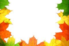 Texture d'automne Photo stock