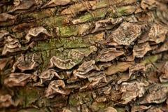 Texture d'?corce d'arbre photos libres de droits
