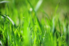 Texture d'herbe Images libres de droits