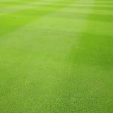 Texture d'herbe Photographie stock