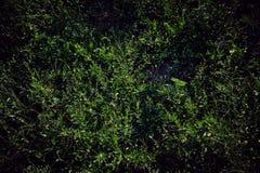 Texture d'herbe Photo libre de droits