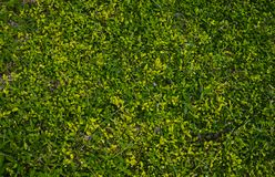 Texture d'herbe avec les nuances multiples du vert images stock