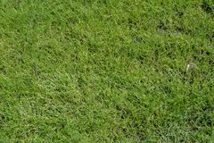 Texture d'herbe ou fond d'herbe Photo stock