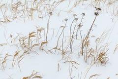 Texture d'herbe sèche dans la neige Photographie stock libre de droits