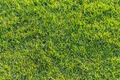 Texture 1 d'herbe verte Photographie stock libre de droits