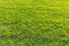 Texture 2 d'herbe verte Photos libres de droits
