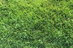 Texture d'herbe verte Photographie stock libre de droits