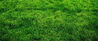 Texture d'herbe verte Photos stock