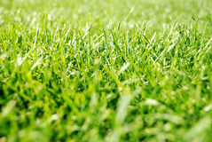 Texture d'herbe verte Photo stock