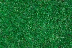 Texture d'herbe verte Image libre de droits