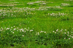 Texture d'herbe verte d'un champ Photos stock
