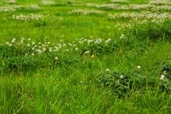 Texture d'herbe verte d'un champ Image stock