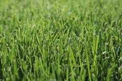 Texture d'herbe verte Fond vert d'herbe du football vue de c?t? d'herbe naturelle Herbe fra?che de coupure Pelouse pour le fond photographie stock