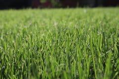 Texture d'herbe verte Fond vert d'herbe du football vue de c?t? d'herbe naturelle Herbe fra?che de coupure Pelouse pour le fond image libre de droits