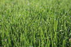 Texture d'herbe verte Fond vert d'herbe du football vue de c?t? d'herbe naturelle Herbe fra?che de coupure Pelouse pour le fond photos libres de droits