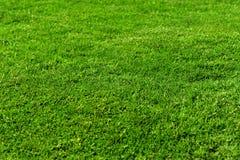 Texture d'herbe verte pour le fond Photo libre de droits