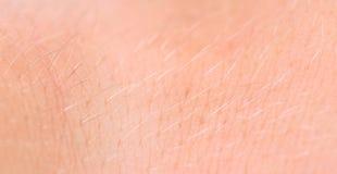 Texture d'humain de peau. Cheveux. Fin. Photo libre de droits