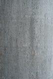 Texture d'un arbre Images libres de droits