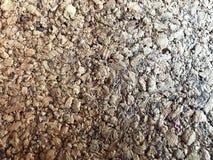 Texture d'un arbre de liège brun en bois fait de sciure avec le soulagement Le fond photo stock