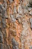 Texture d'une écorce Photographie stock