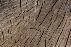 Texture d'une coupe naturelle d'un tronc d'arbre pour un fond photos stock