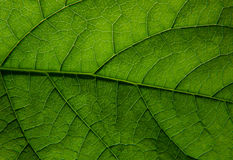Texture d'une lame verte photographie stock