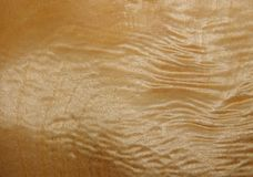 Texture d'une surface en bois d'un arbre avec une racine de peuplier Placage en bois pour des meubles Photos stock